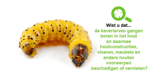 Houtworm bestrijden Zwolle