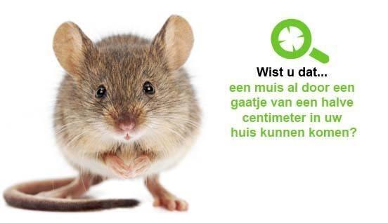 last van muizen