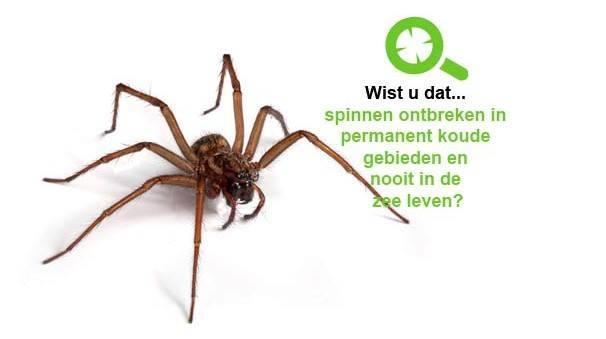 ongediertebestrijding spinnen