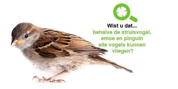 Vogels bestrijden
