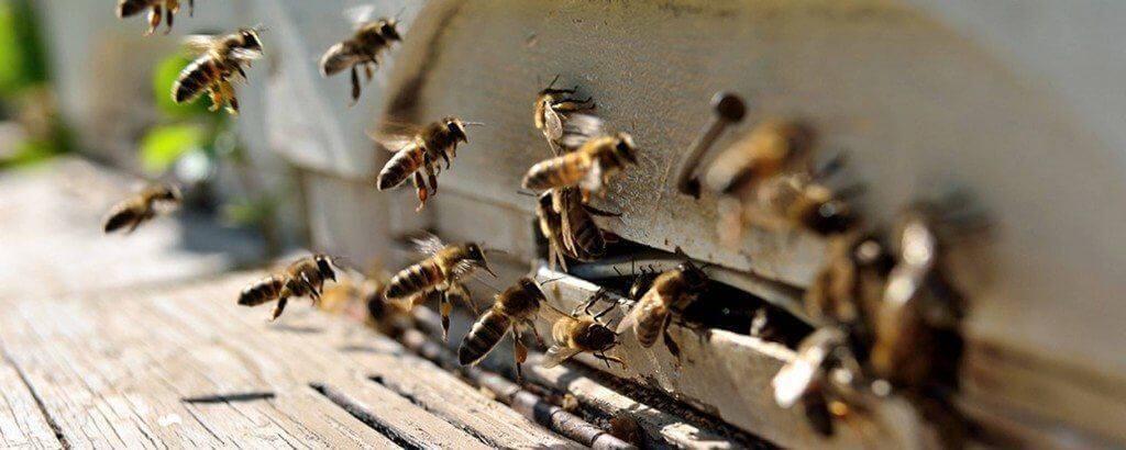 wespennest verwijderen Kampen