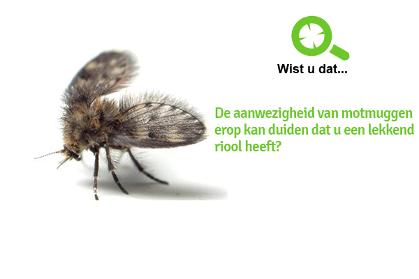 motmuggen bestrijden